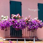 nurserygarden_2015-07-08_12-40-18