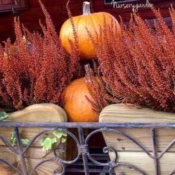 nurserygarden_2015-09-18_09-07-03