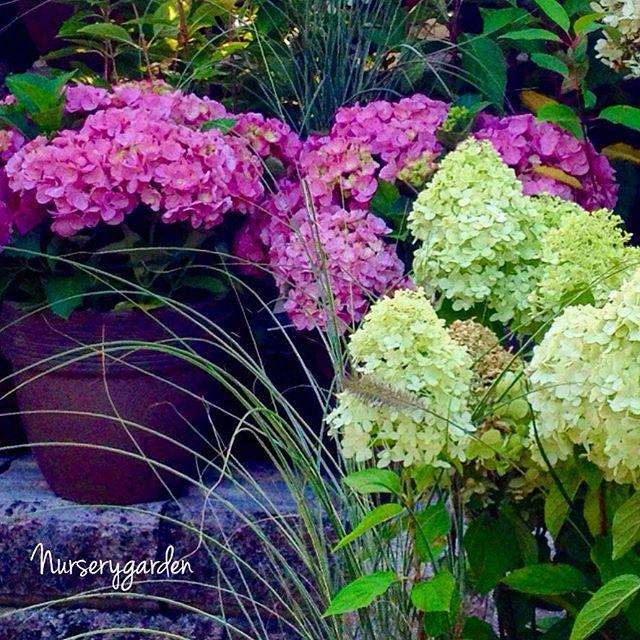 nurserygarden_2015-09-24_15-21-40