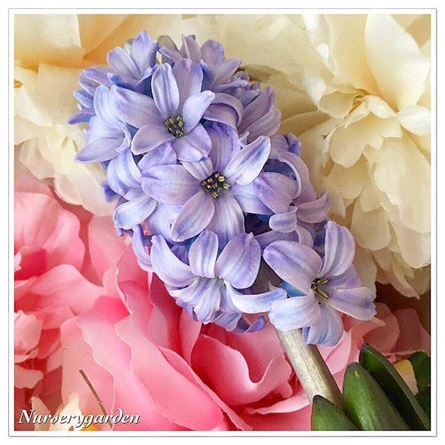 nurserygarden_2016-01-30_08-52-51