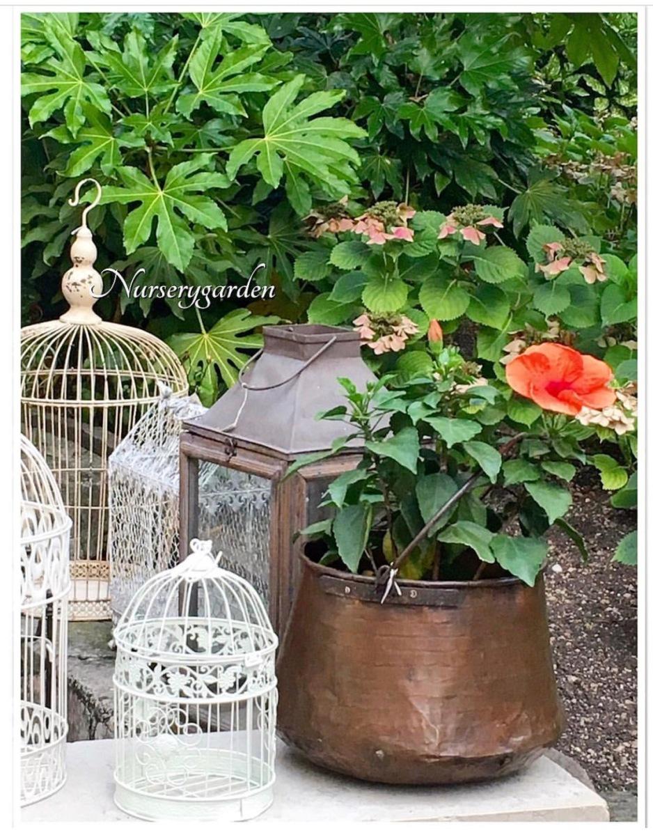 Decoriamo insieme balcone e giardino for Giardino balcone