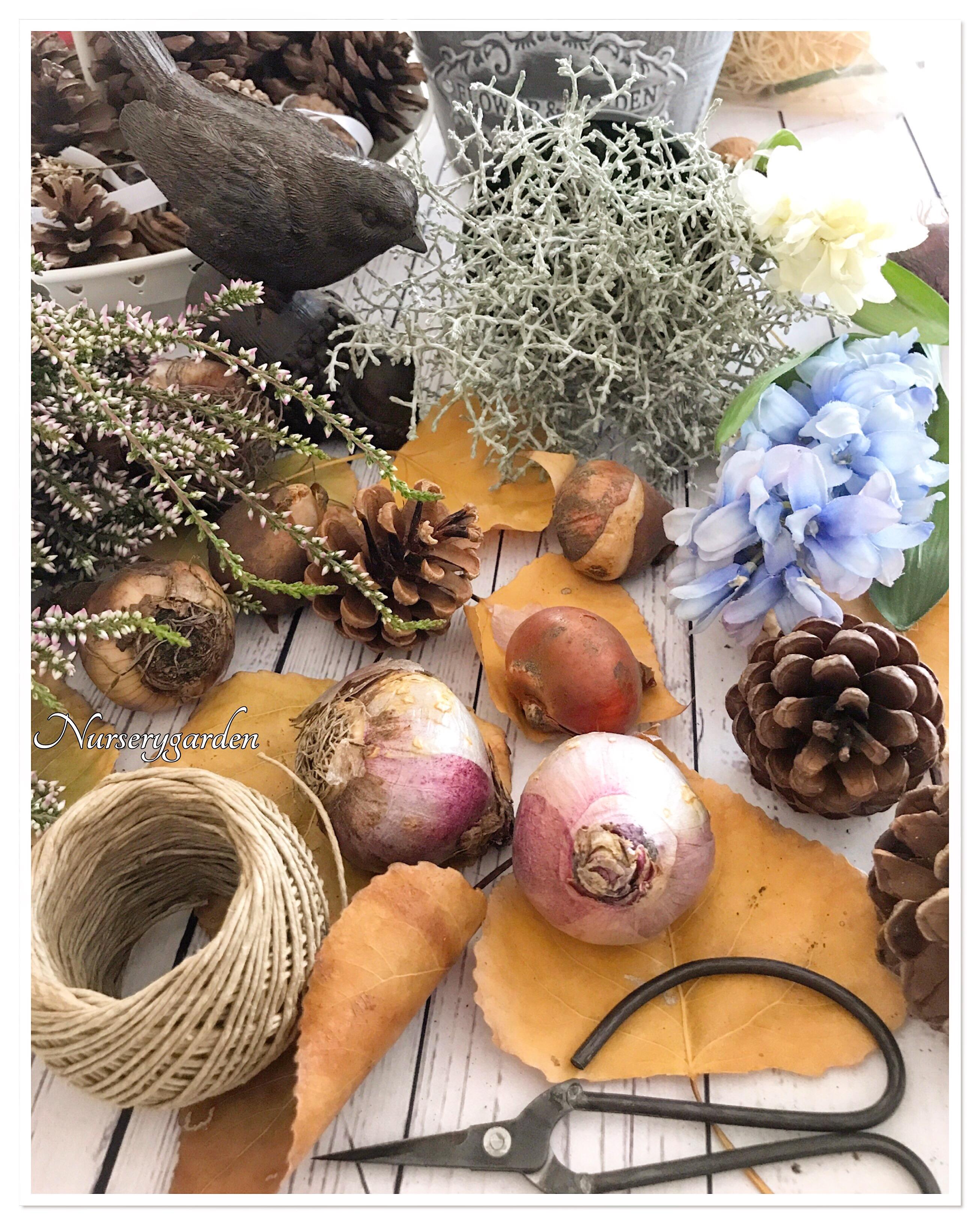 Piantare I Bulbi Di Tulipani È il momento dei bulbi! – mynurserygarden