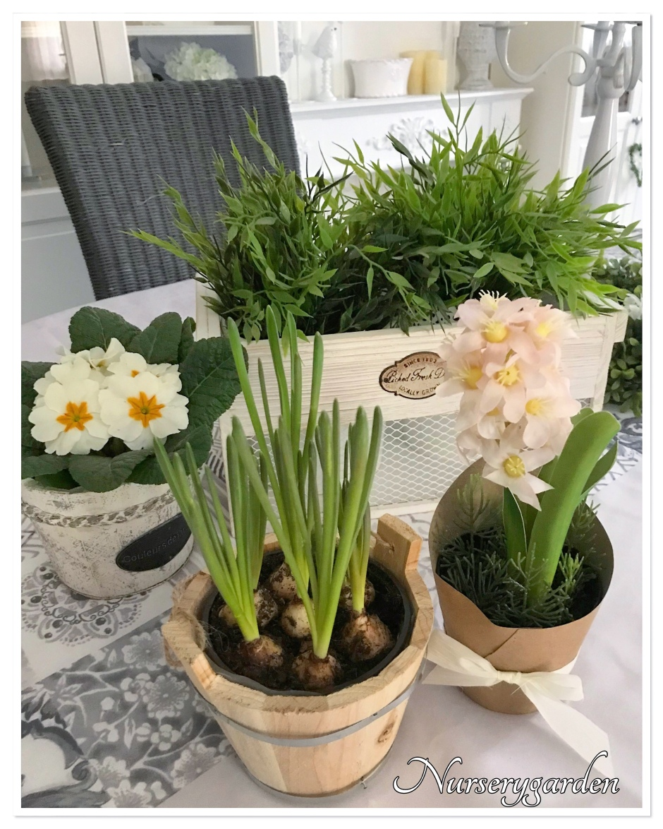 Ortensie Bianche Come Curarle fiori – pagina 3 – mynurserygarden