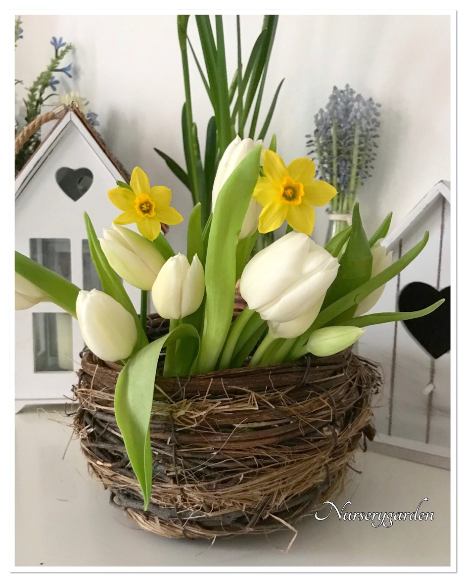 Quali Bulbi Piantare In Primavera bulbose – mynurserygarden